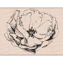 Tampon bois Hero Arts - Antique Rose