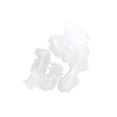 Plumes de dinde blanches