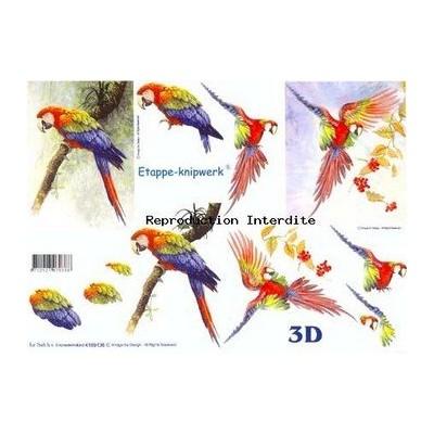 Image Carterie 3D - Perroquets multicolores