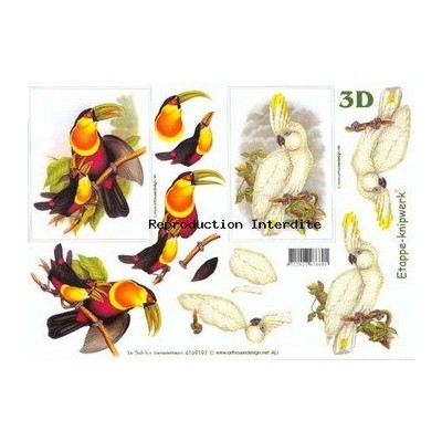 Image Carterie 3D - Toucan & Cacatoes