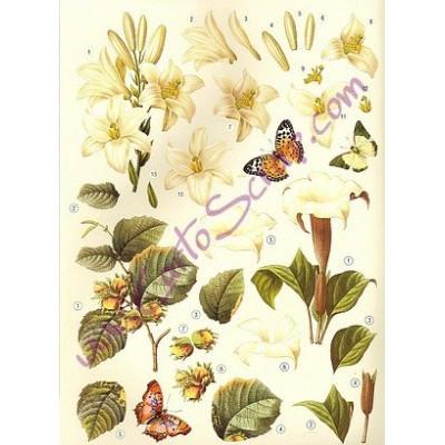 Image Carterie 3D pré-découpée - Fleurs blanches